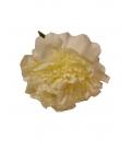 Flor Peonias